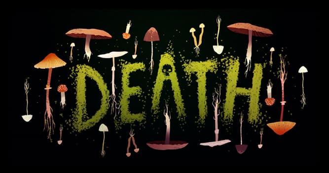 natura Pytanie-Ciekawostka: Jakie stworzenia zabijały rocznie najwięcej ludzi na całym świecie w przeciągu ostatnich 25 lat?