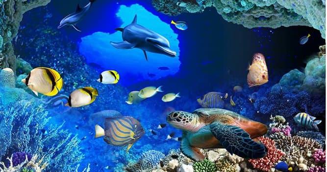 natura Pytanie-Ciekawostka: Która z tych ryb oddycha powietrzem atmosferycznym?