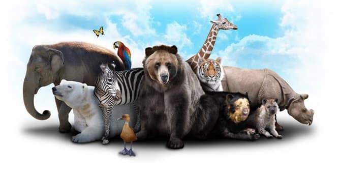 natura Pytanie-Ciekawostka: Które zwierzę wydaje buczenie?
