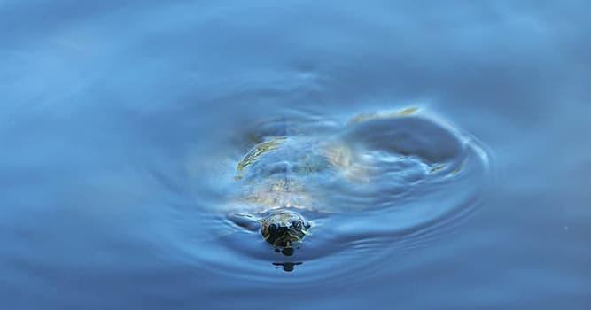 """natura Pytanie-Ciekawostka: Którego z tych ssaków niekiedy nazywano """"krową morską""""?"""