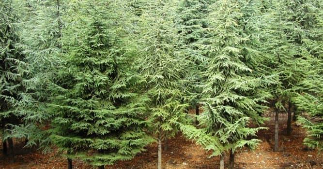 Geografia Pytanie-Ciekawostka: Który kraj jako jedyny na świecie na przestrzeni ostatnich 100 lat zanotował przyrost ilości drzew?