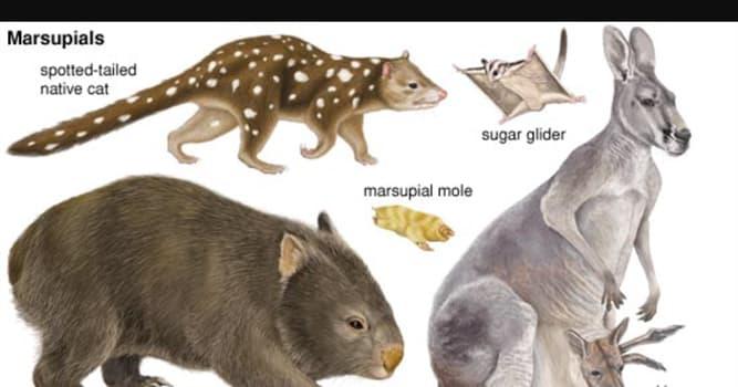 natura Pytanie-Ciekawostka: Który z tych gatunków torbacza jako jedyny zamieszkuje Amerykę Północną?