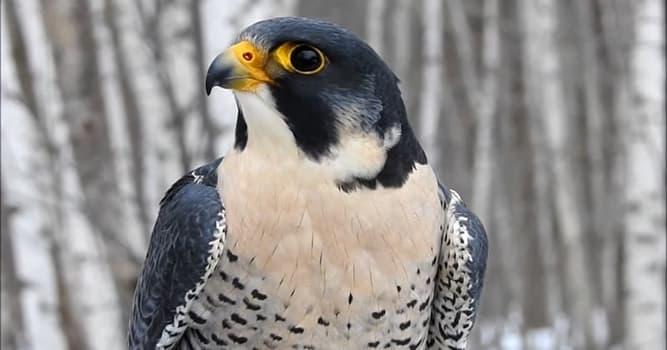 natura Pytanie-Ciekawostka: Który z tych ptaków jest jadowity?