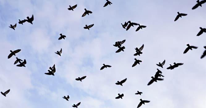 natura Pytanie-Ciekawostka: Których ptaków uważano za najmądrzejszych?