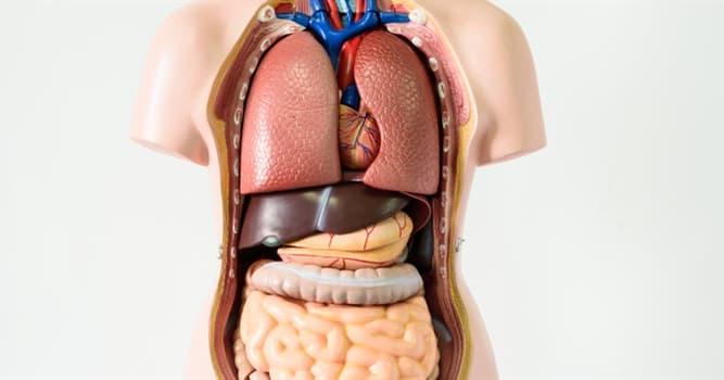 nauka Pytanie-Ciekawostka: W której części ludzkiego ciała znajduje się płat czołowy?