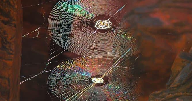 natura Pytanie-Ciekawostka: Z czego zrobiona jest nić pająka?