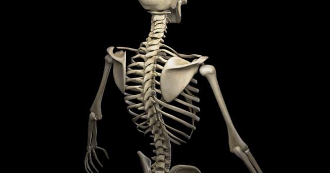 nauka Pytanie-Ciekawostka: Gdzie w ciele człowieka znajduje się jego najmniejszy mięsień?