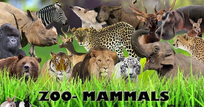 natura Pytanie-Ciekawostka: Który z tych ssaków jest jadowity?