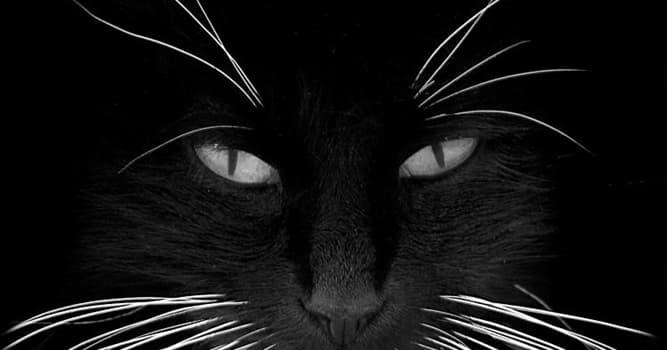natura Pytanie-Ciekawostka: Po co kotu wąsy (wibrysy)?