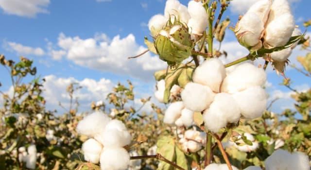 Naturaleza Pregunta Trivia: ¿Qué tipo de insecto es el gorgojo del algodón?