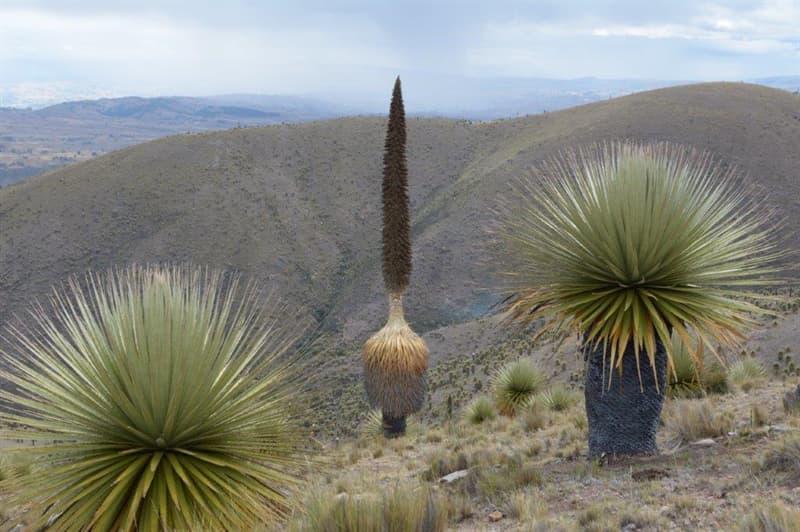 Natur Wissensfrage: Welche Pflanze hat den längsten Blütenstand der Welt?