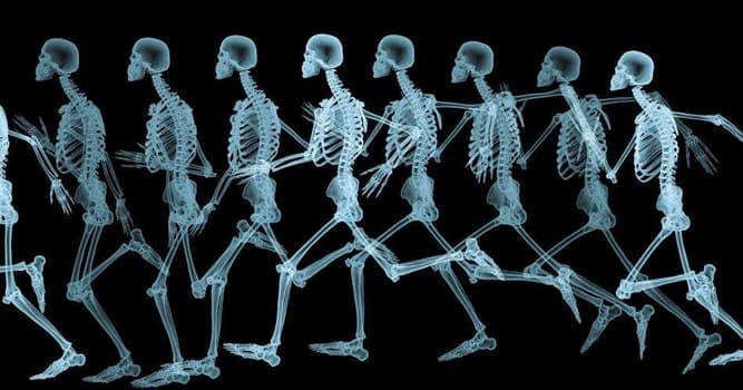 Science Trivia Question: Where on the body are the talus bones?