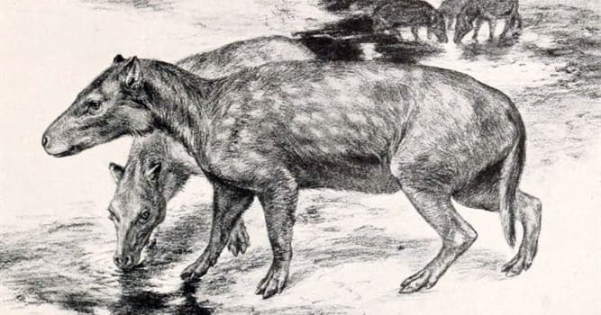 Nature Trivia Question: Which extinct animal is in the picture?