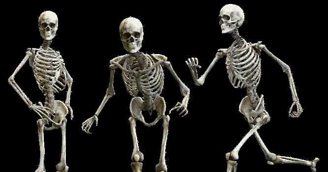 Science Trivia Question: Which of these is the most fractured human bone?