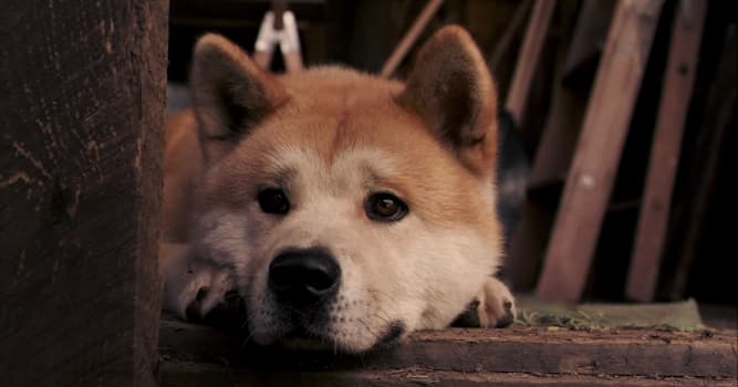 """Movies & TV Trivia Question: Who played Professor Parker Wilson in the movie """"Hachi: A Dog's Tale""""?"""