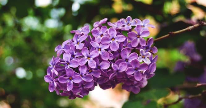 природа Запитання-цікавинка: Яка рослина зображена на фото?