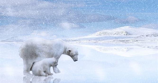 natura Pytanie-Ciekawostka: Dlaczego niedźwiedzie polarne nie polują na pingwiny?