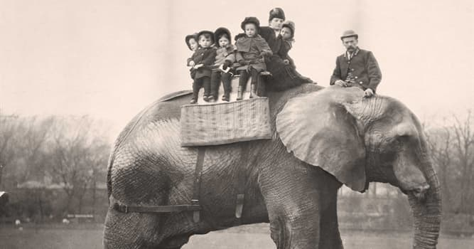History Trivia Question: How old was Jumbo the Circus Elephant when he died?