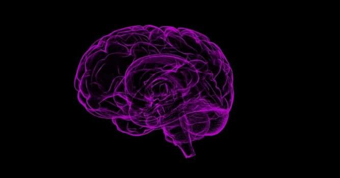 nauka Pytanie-Ciekawostka: Jak nazywa się największa część ludzkiego mózgu?