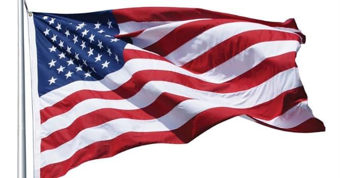 natura Pytanie-Ciekawostka: Jaki ptak jest narodowym symbolem Stanów Zjednoczonych?