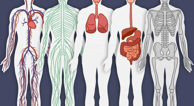 Сiencia Pregunta Trivia: ¿Qué término médico designa la acumulación de líquido en los tejidos del cuerpo?
