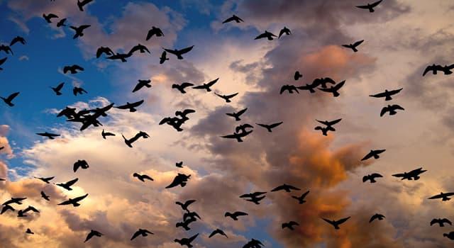 Naturaleza Pregunta Trivia: ¿De qué color es, principalmente, el plumaje de la urraca común?