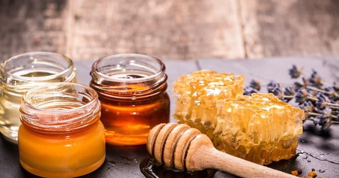 Gesellschaft Wissensfrage: Kann Honig schlecht werden?