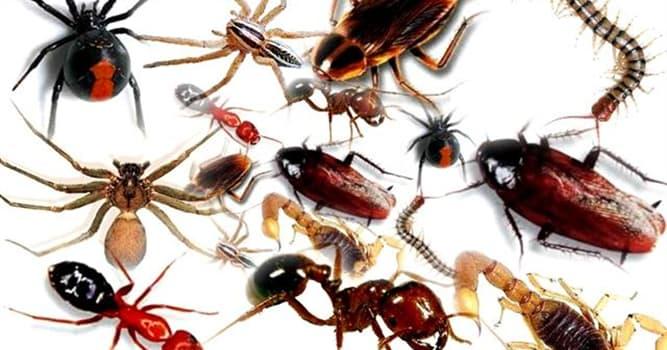 Natur Wissensfrage: Was ist das einzige Insekt, das den Kopf drehen kann?