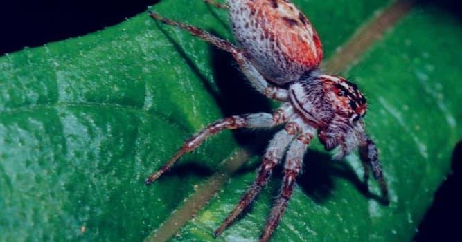 Natur Wissensfrage: Was ist die größte Spinne der Welt?