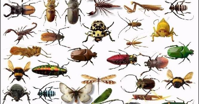 Natur Wissensfrage: Welche ist die größte Ordnung aus der Klasse der Insekten?
