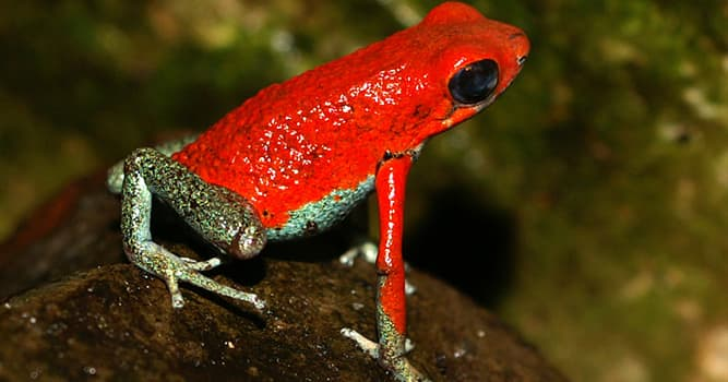 Nature Trivia Question: What is the coloration of an animal that warns predators it is toxic called?