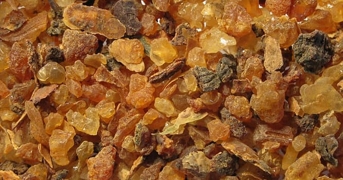 Nature Trivia Question: Which natural gum or resin is extracted from small, thorny tree species of the genus Commiphora?