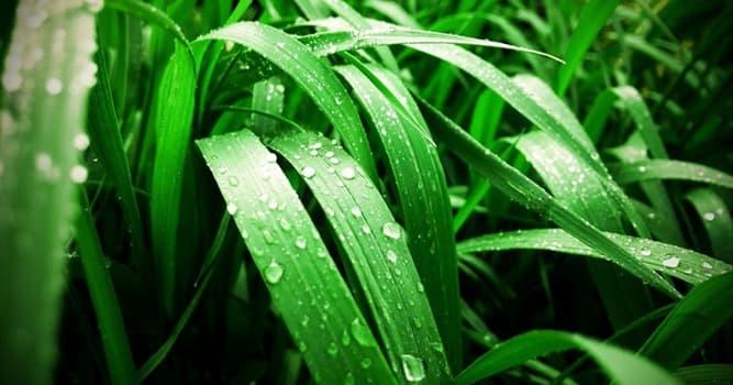 Wissenschaft Wissensfrage: Wie heißt die Wissenschaft von den Pflanzen?