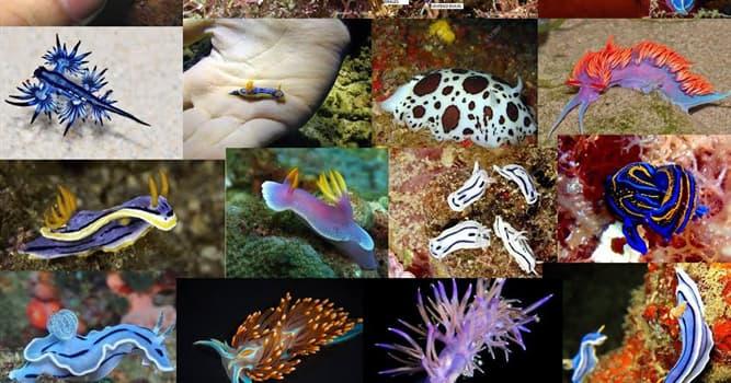 Naturaleza Pregunta Trivia: ¿A qué orden de animales pertenece el Nudibranchia?