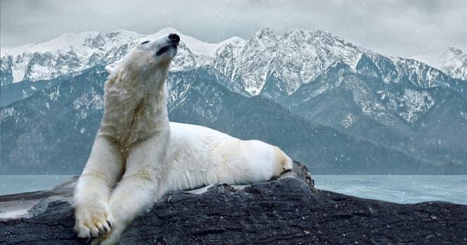 """Naturaleza Pregunta Trivia: ¿Qué significa el nombre en latín de los osos polares, """"Ursus maritimus""""?"""