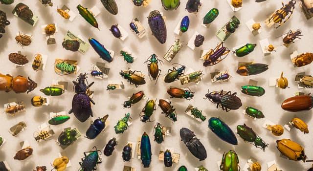 Naturaleza Pregunta Trivia: ¿Cómo se llama el insecto himenóptero de la familia formicidae único miembro del género Paraponera?