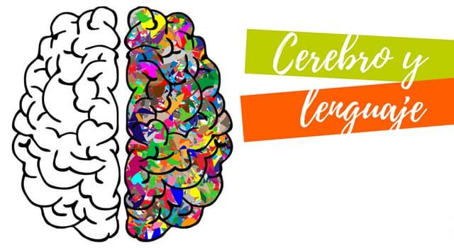 Сiencia Pregunta Trivia: ¿Con qué área del cerebro está relacionado el lenguaje?