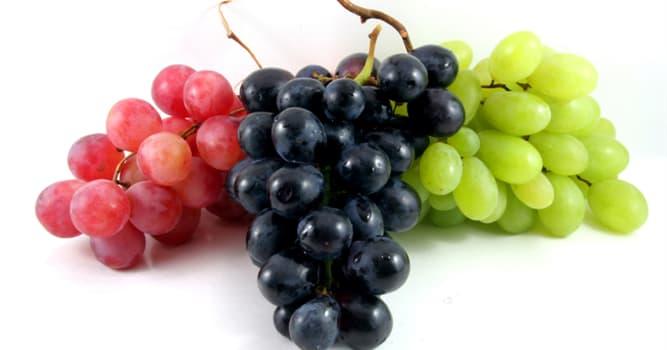Naturaleza Pregunta Trivia: ¿Cuál de las siguientes NO es una variedad de uva?