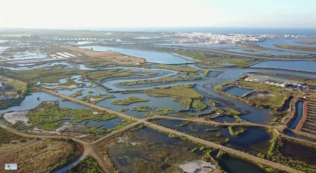 Naturaleza Pregunta Trivia: ¿Cuáles son las características que predominan en la formación de las marismas?
