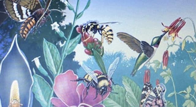 Naturaleza Pregunta Trivia: ¿Cuántas clases de abejas existen en el mundo?