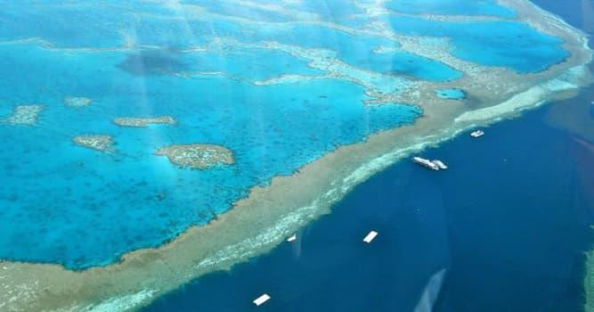 Geographie Wissensfrage: Das Great Barrier Reef befindet sich vor der Küste ... ?