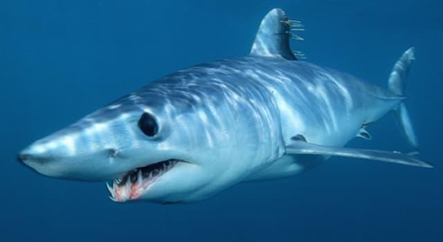 Naturaleza Pregunta Trivia: ¿De qué pez se alimenta básicamente el tiburón mako?