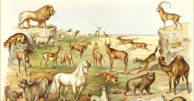Cultura Pregunta Trivia: En la Biblia, ¿a qué animal se le carga simbólicamente los pecados del pueblo judío?