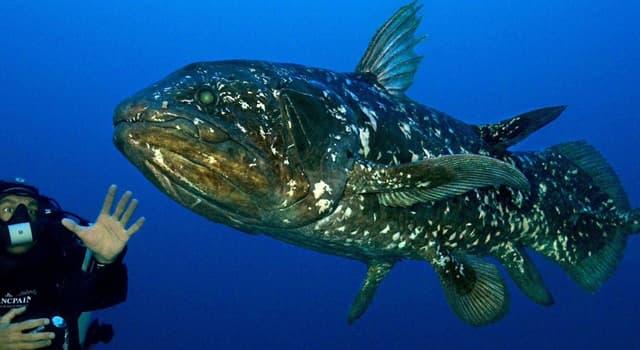 Naturaleza Pregunta Trivia: ¿En la costa de qué país fue encontrado un ejemplar vivo del relicto pez celacanto en 1938?