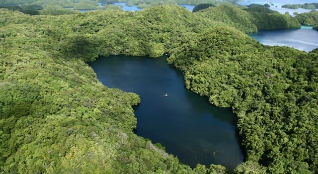 Geografía Pregunta Trivia: ¿En qué islas está ubicado el lago de las Medusas?
