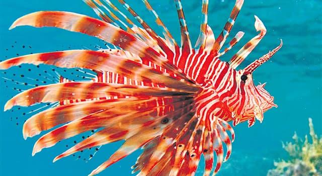 Naturaleza Pregunta Trivia: ¿En qué océanos habita el pez león?