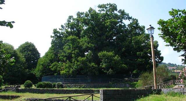 """Geografía Pregunta Trivia: ¿En qué región de Italia se encuentra el árbol llamado """"Castaño de los cien caballos""""?"""