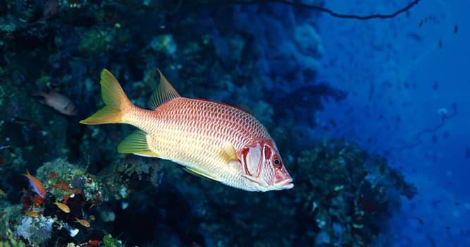 Naturaleza Pregunta Trivia: ¿Cómo se determina usualmente la edad de un pez?