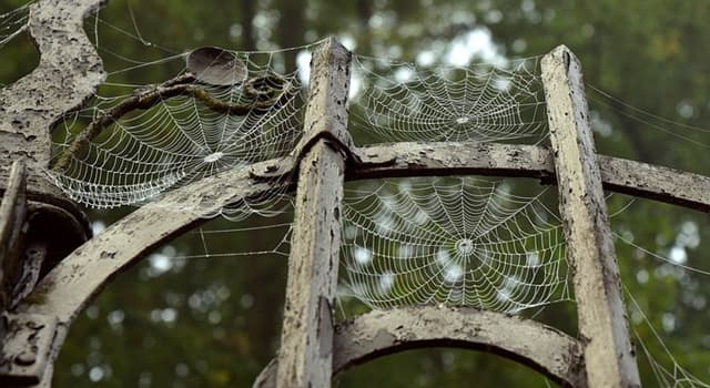 Cultura Pregunta Trivia: En la mitología griega, ¿qué niña fue convertida en una araña por la diosa Atenea?