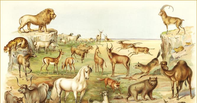 Culture Trivia Question: In the Bible, which animal is symbolically burdened with the sins of all the Jewish people?
